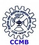 CCMB Vacancies For Junior Hindi Translator – Telangana